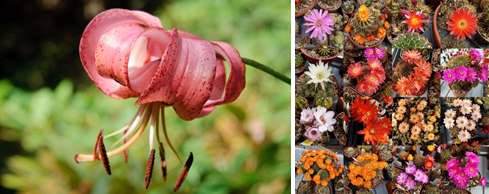 Some of the plants to be featured in the show. Images by Stan Farrow and Paul Doyle