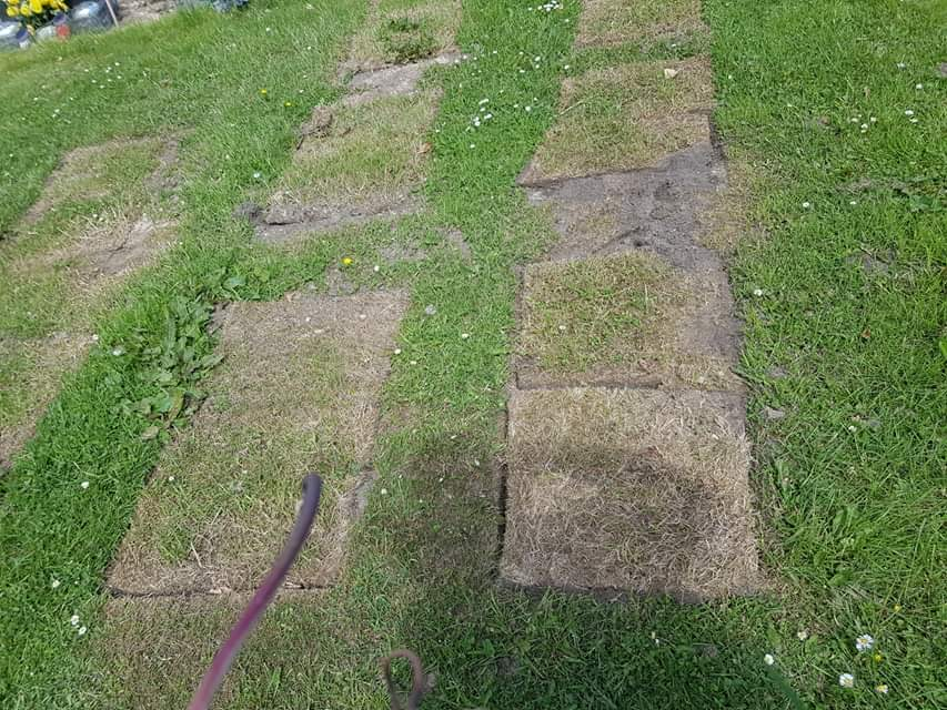 The parched grass surrounding the graves at Hazlehead Cemetery