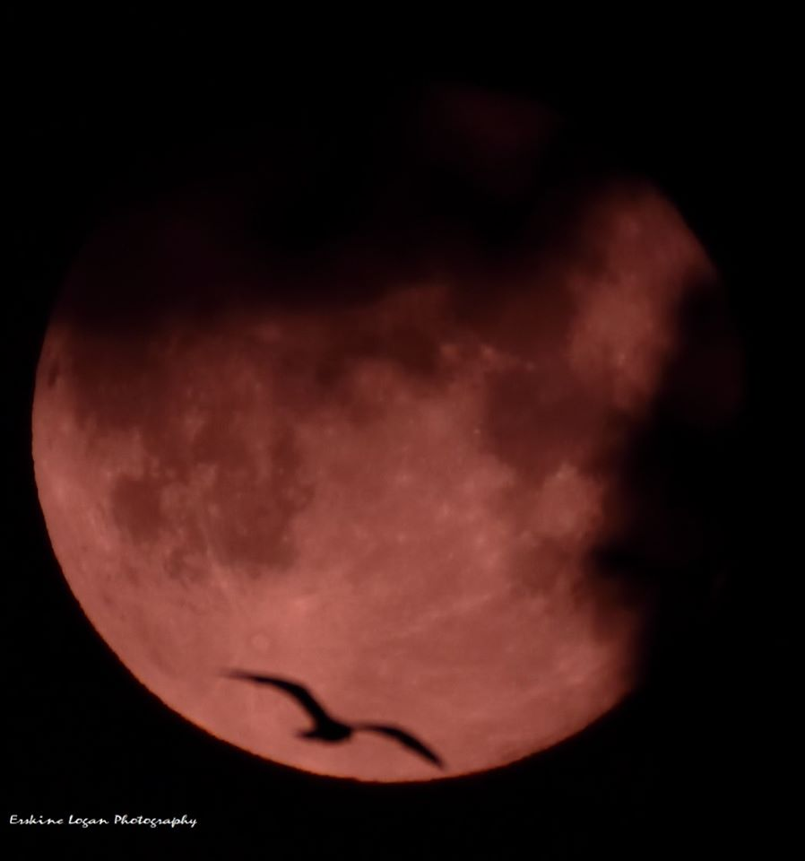 Erskine Logan's photograph of the strawberry moon over Aberdeen