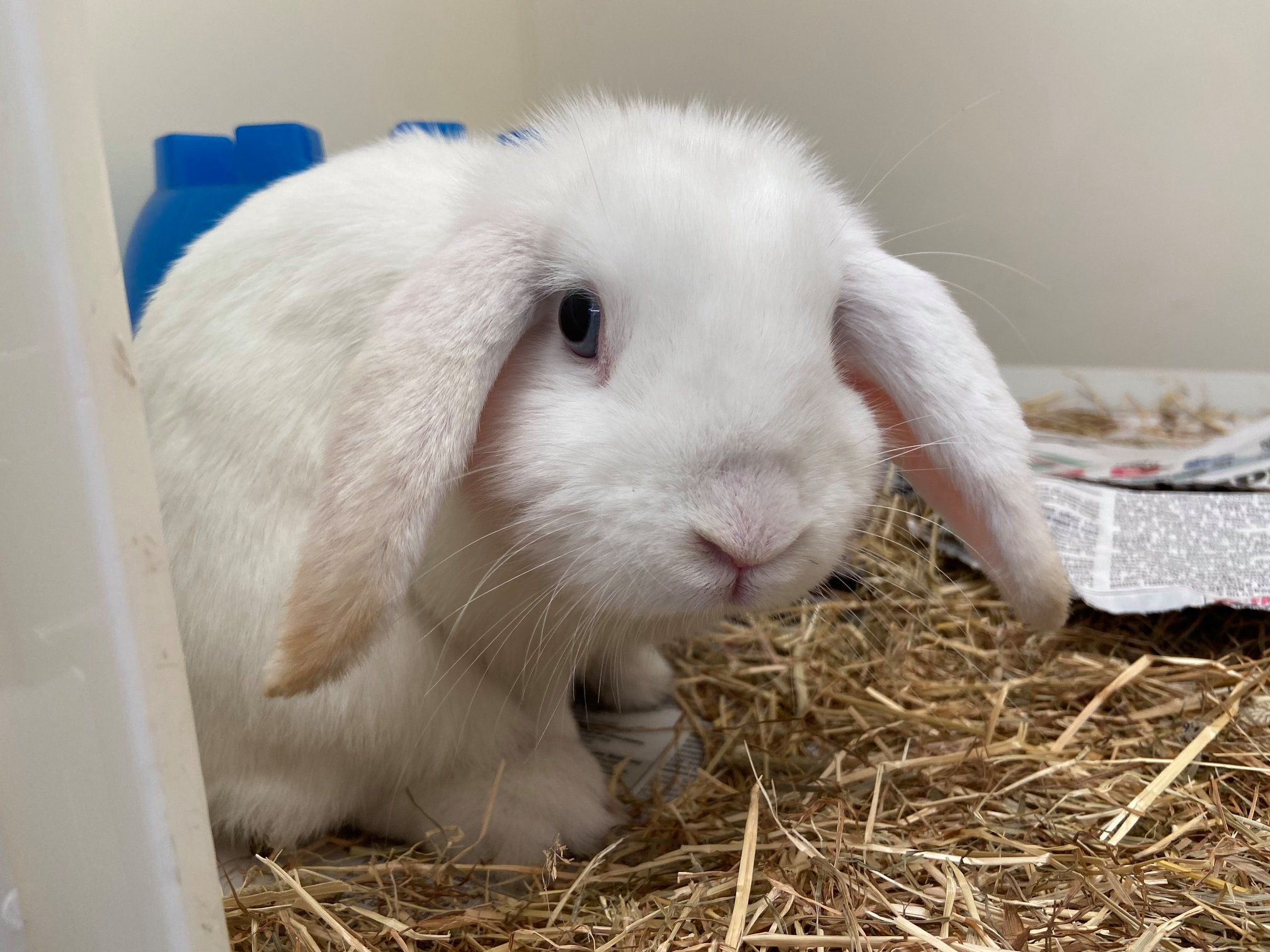 Can you help get this rabbit home?