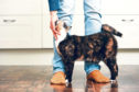Only a handful of cats have tested positive for Covid-19 across the world