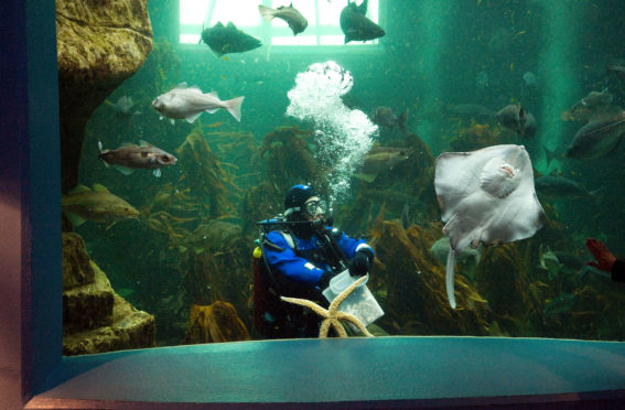 Macduff Marine Aquarium will reopen on Tuesday