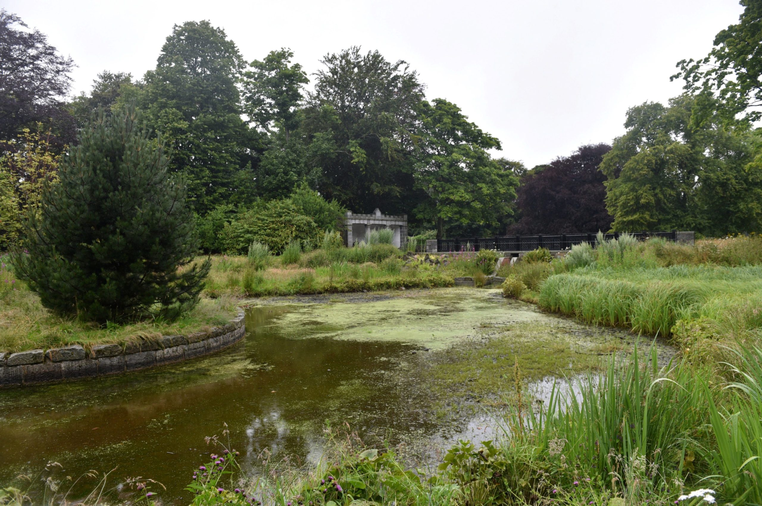 "The ""unsightly"" green algae is visible on all the ponds in Duthie Park"