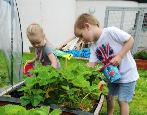 Middlefield Community Project decided to start growing its own fruit and vegetables