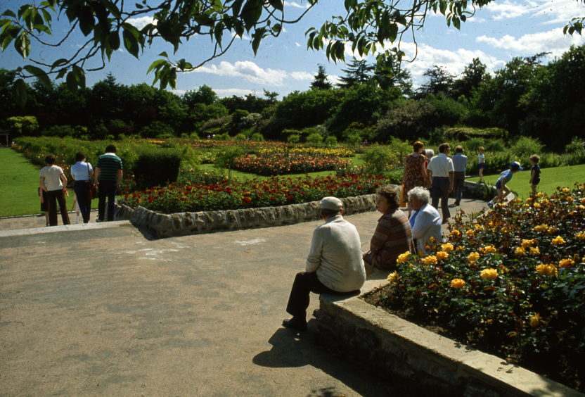 1970s photograph showing visitors to the park enjoying the rose garden in bloom.