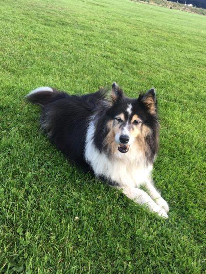 821 - Pippa (Dog)