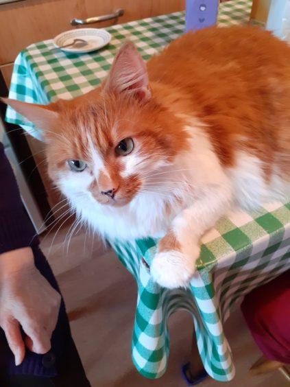 370 - Otis (Cat)