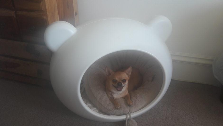 269 - Maisie (Dog)