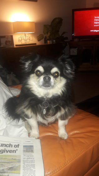 314 - Truffles (Dog)