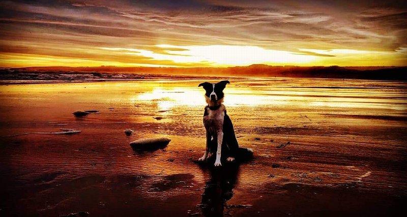152 - Willis (Dog)