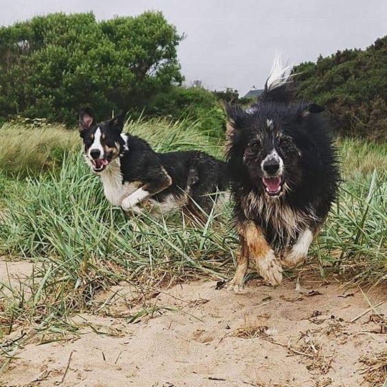 157 - Jude & Kai (Dog)