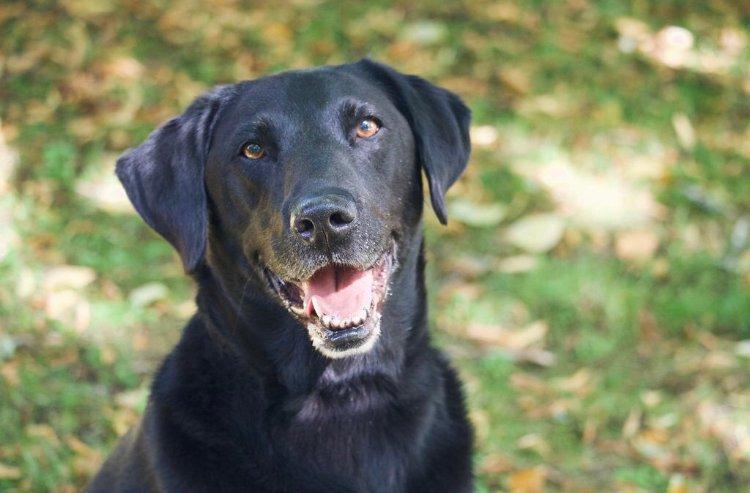 160 - Alfie Barton (Dog)
