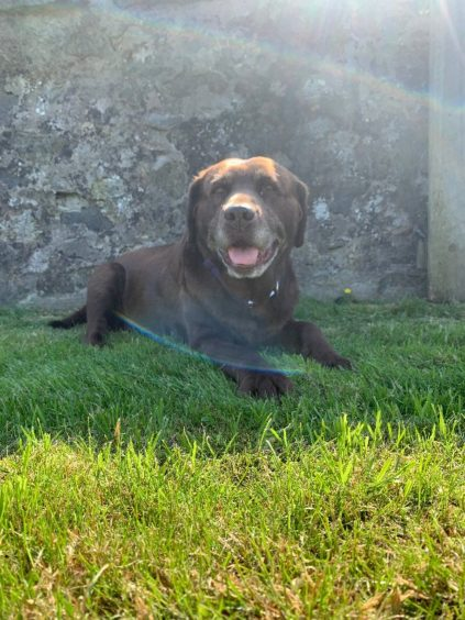 161 - Lexie (Dog)