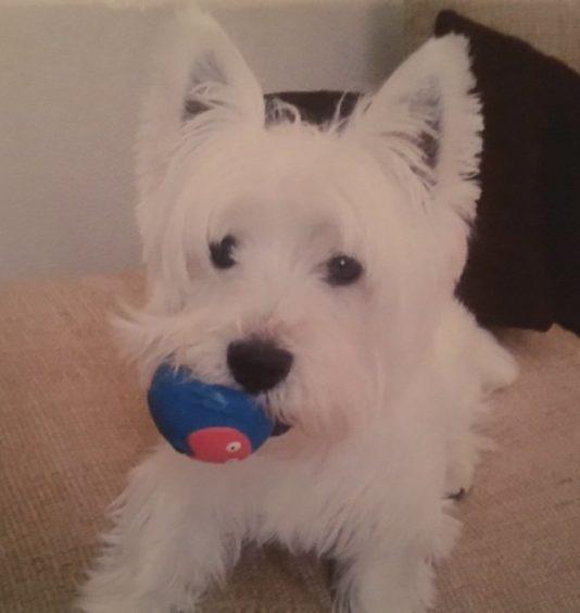 162 - Ralph (Dog)