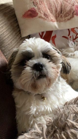 163 - Millie Innes (Dog)