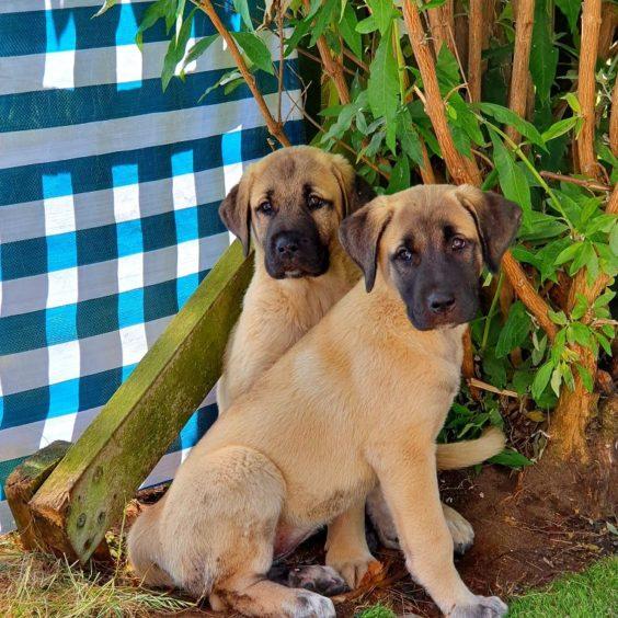165 - Kleo & Kiesta (Dog)