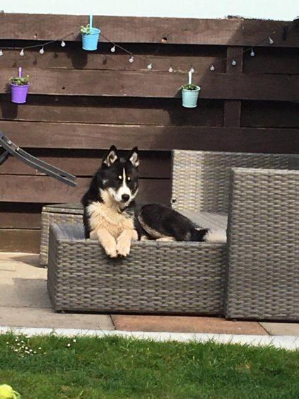 167 - Piper (Dog)