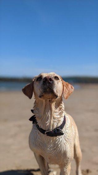 169 - Juno (dog)