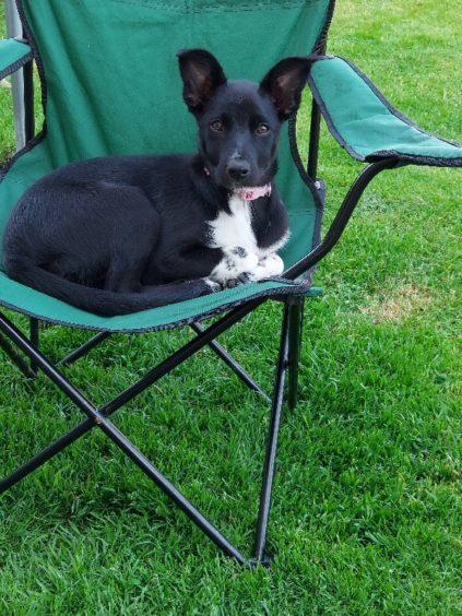 171 - Sasha Gibson (Dog)