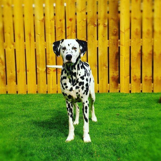 173 - Cole (Dog)