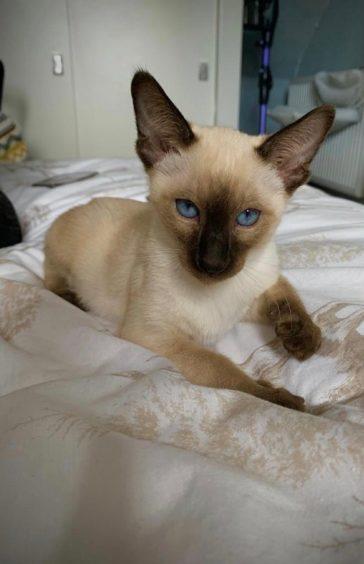 177 - Koco (Cat)