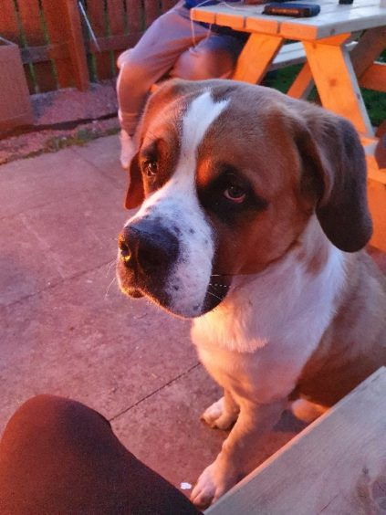 178 - Rufus (Dog)