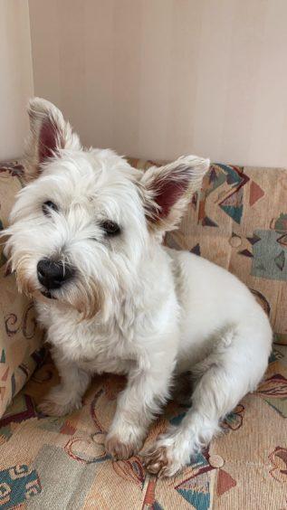 179 - Caber (Dog)