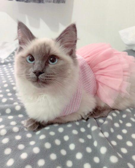 180 - Prada (Cat)