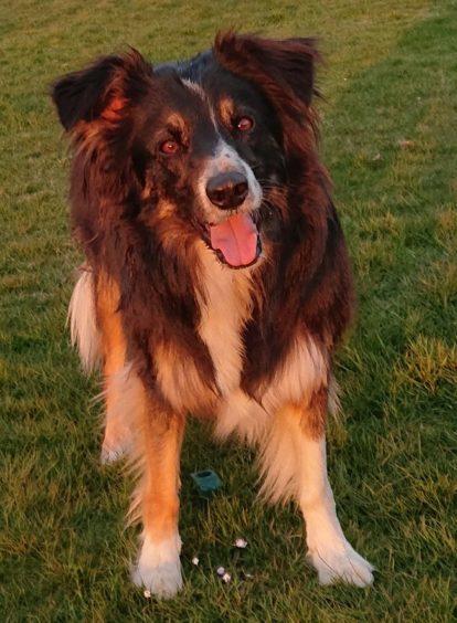 182 - Jude (Dog)
