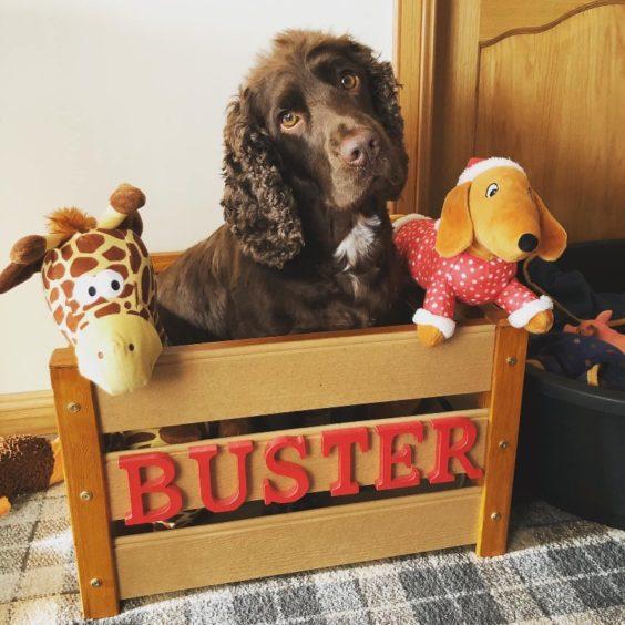 183 - Buster (Dog)