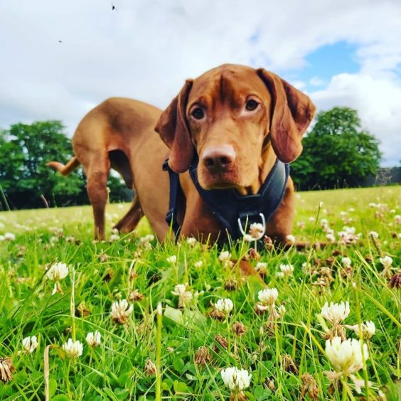 185 - Rufus Christie (Dog)