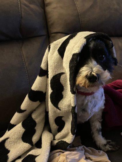 188 - Skye Stirling (Dog)