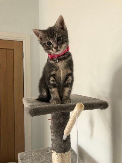 189 - Maggie (Cat)