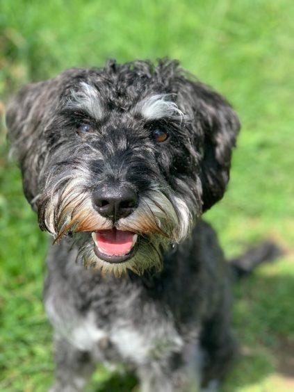 191 - Angus (dog)