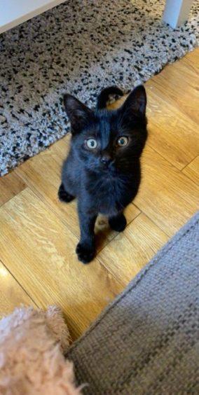 192 - Monty (Cat)
