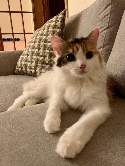 193 - Abbie (Cat)