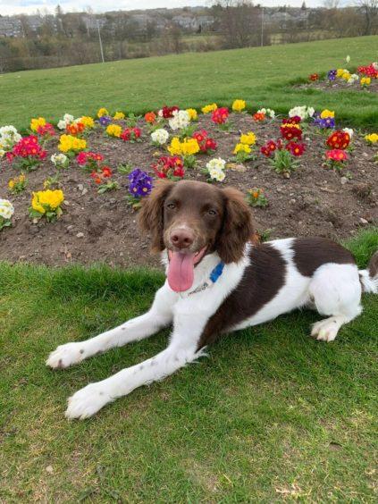 194 - Bailey Reid (Dog)