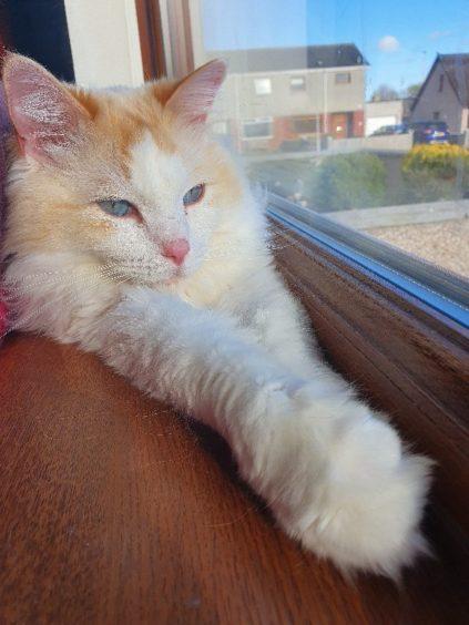 196 - Milo Paterson (Cat)