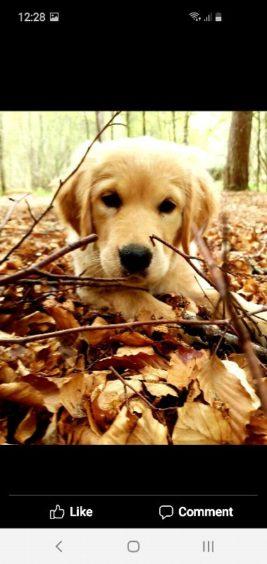 198 - Poppy Cosgrove (dog)