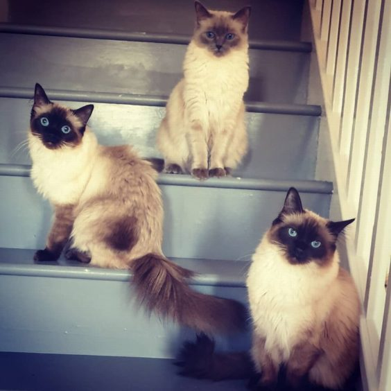 201 - Lily, Lola and Luna (Cats)