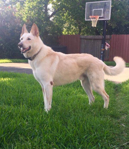 205 - Beau (Dog)