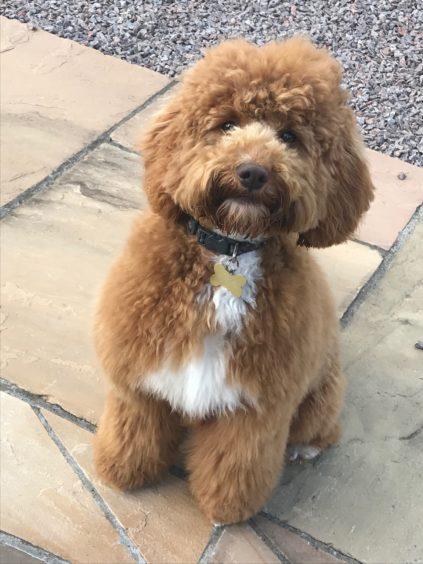 215 - Maisie (Dog)