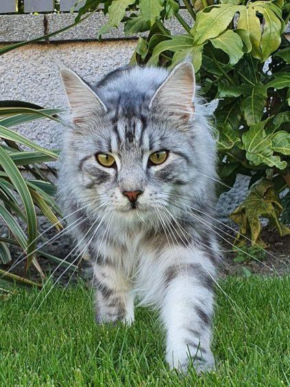 217 - Marco (Cat)