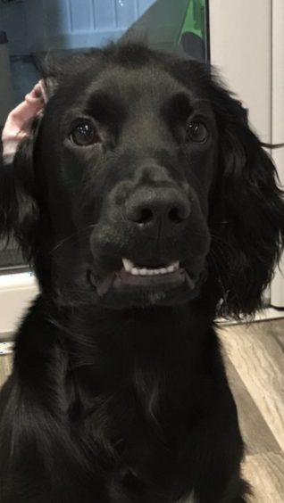 221 - Dennis (Dog)