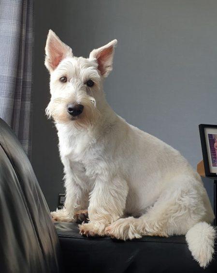 223 - Cooper Greig (Dog)