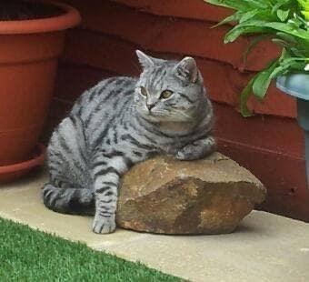224 - Alfie Davie-Gordon (Cat)