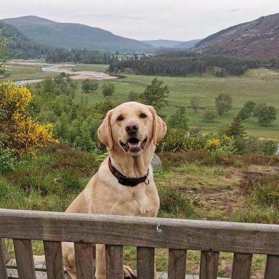 228 - Jura Cowieson (Dog)