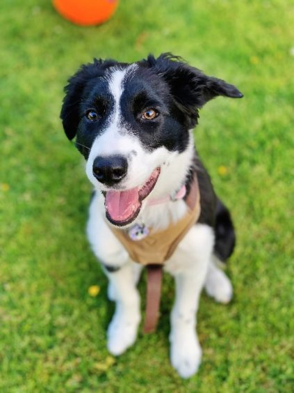 229 - Luna Longmore (Dog)