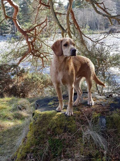 230 - Milo Walker (Dog)
