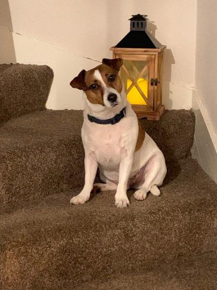 232 - Buster Menmuir (Dog)